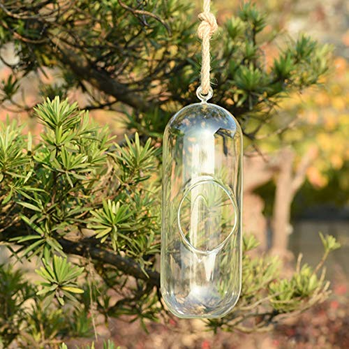 KnikGlass Hängende Pflanzentöpfe, Transparente Glas, Terrarium Groß 28cm für Sukkulenten, Luftpflanzen