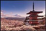 Mount Fuji Blossom Poster (62x93 cm) gerahmt in: Rahmen