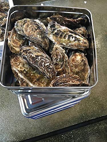 【厚岸産牡蠣パーティセット】ガンガン焼きセット 殻付き牡蠣丸Lサイズ20個(軍手ナイフ付き)【発送地厚岸】