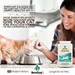 Best Paw Nutrition - Naturel calmant pour Les Chiens - Favorise Le comportement Calme - Aide Les Animaux domestiques à gérer Le Stress dans différentes Situations #3