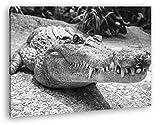 deyoli Anmutiges Krokodil Format: 60x40 Effekt: