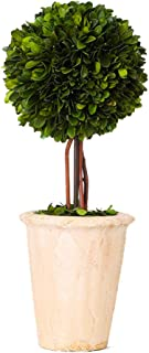 Best dried topiary trees Reviews