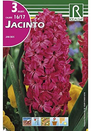 Bulbos de jacinto jan bos (bolsa 3 bulbos)