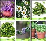 Tipo di semi: herb Adatto: indoor Sementi delle piante organic Semi genuini e vitali Siamo venditori autorizzati per pinkdose.