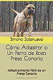 Cómo Adiestrar a Un Perro de Raza Presa Canario: Adiestramiento Fácil de un Presa Canario
