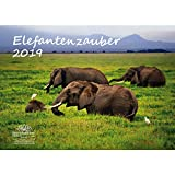 Elefant magique–Format A3–Haute Calendrier 2019–Éléphant–Afrique–Animaux–désert–Naturel–Coffret cadeau avec 1carte de vœux et 1carte de Noël–Édition âme magique