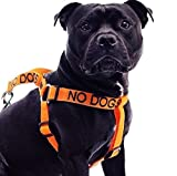 No Dogs Orange Color Coded Alert L-XL Non pull Dog Harness (Not Good With Other Dogs) Prevents Accidents By Warning Others of Your Dog in Advance