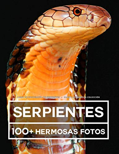 Libro De Fotografía - Serpientes - Gran y Asombrosa Colección: 100 Hermosas Fotos En Este Fantástico Libro De Fotos De Serpientes - Para Niños y Adultos