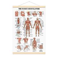 WEROUTE 人間の筋肉システムチャート 吊り下げスクロールフレーム キャンバスプリント 人体解剖学的なポスター 16.5×25インチ