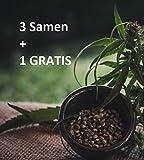 CANNA24 - Frosty Gelato - Feminisierte (weibliche) Samen - 4 Stück