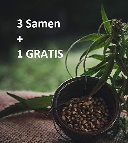 CANNA24 - Sour Diesel - Feminisierte (weibliche) Samen - 4 Stück