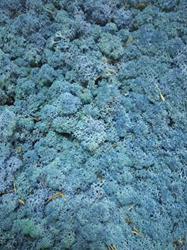 Muschio di renna preservato. Muschio finlandi liofilizzato della più confezione da 500 grammi, colore blu, origine Spagna.