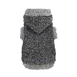 Dackel-Kleidung - Ankleiden Sie Ihren Doxie für jedes Wetter