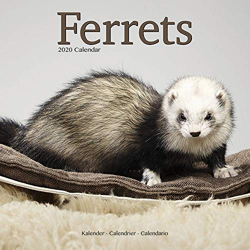 Avonside Publishing Ltd: Ferrets Calendar 2020