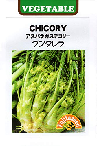 【輸入種子】 CHICORY アスパラガスチコリー プンタレラ 藤田種子のタネ