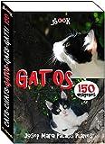 Gatos (150 imágenes)