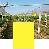 Homo Trends 30Pcs Fly Paper 20x15cm Trampas para Moscas Adhesivas, Trampas Adhesivas de Doble Cara, Pegatinas de Papel para Moscas, Tablero Adhesivo para Insectos como Mosquitos de Hongos (Amarillo)