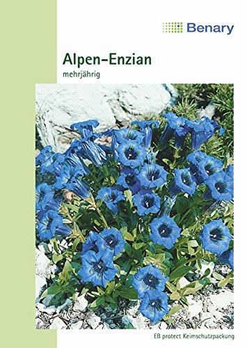 Alpen Enzian,Gentiana acaulis, ca. 50 Samen