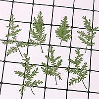 24枚本物のドライプレスフラワー、カラフルなデイジーの盛り合わせ、アートクラフトDIY用のアジサイの葉