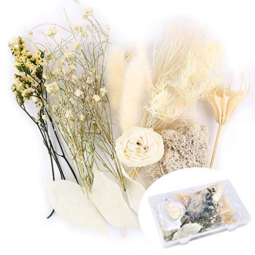 Flores Secas Manualidades Navidad flores secas  Marca UFLF