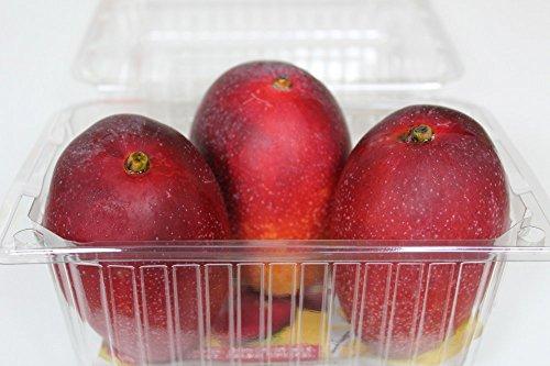 沖縄県産完熟マンゴー 優品約500g(2〜3個)ミニマンゴー大き目