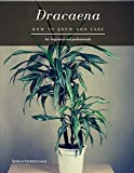 Dracaena: How to grow and care