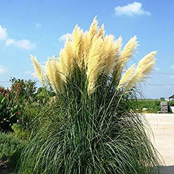 VISTARIC 12: Seltene Bonsai Kürbiskerne Cucurbita Golddraht Kürbis Garten Gewächshaus Bio-Gemüsesamen Geeignet für Kochen 20 PC/Beutel 12