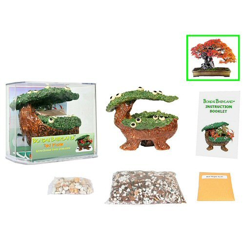 Eve's Bonsai Babyland Red Maple Seed Kit, Complete Kit to Grow Red Maple Bonsai Trees from Seed, Unique and Exclusive Bonsai Babyland Planter