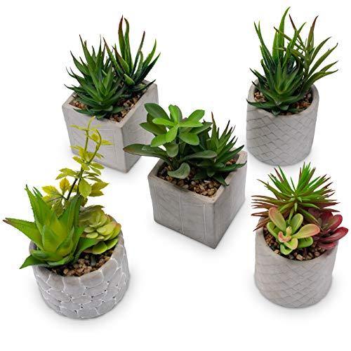 Wella Flora Sukkulenten künstlich [5er Set] - Täuschend echte künstliche Pflanzen - Ideale Größe perfekt als Wohnzimmer, Büro und Bad-Deko - Kunstpflanzen im Topf für drinnen & draußen