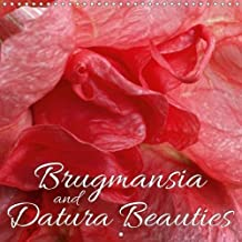 Brugmansia and Datura Beauties 2018: Enjoy 12 Wonderful Close-Ups of Brugmansia and Datura Beauties (Calvendo Nature)
