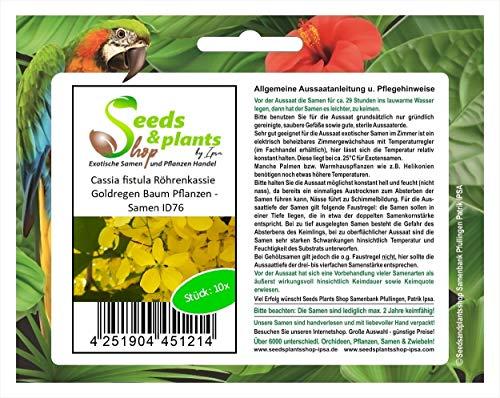 Stk - 10x Cassia fistula Röhrenkassie Goldregen Baum Pflanzen - Samen ID76 - Seeds Plants Shop Samenbank Pfullingen Patrik Ipsa