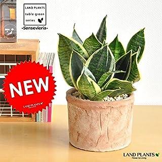 LAND PLANTS 空気清浄の木 サンスベリア モスポット鉢