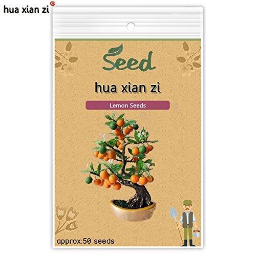 Lemon Tree Graines Citrus Limon arbres Graines Fruit Bonsai plante bricolage jardin comestible vert citron 50 graines/sac