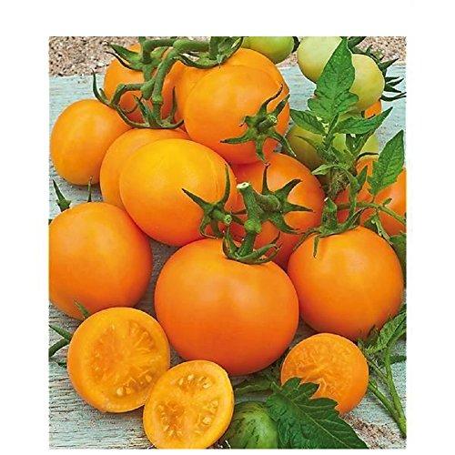 50 graines de tomate arancia tomate grappe orange VARIETE RARE