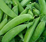 Pea Seed: 200+ Seeds Sugar Snap Pea Fresh Seed