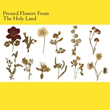 Pressed Flowers From The Holy Land