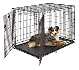 My dog hates his crate what can I do 3