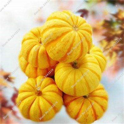Graine de citrouille Cucurbita fil d'or citrouille Melon Fruits et légumes des semences meilleures ventes de l'extérieur, Bonsai 30 Plantes en pot 21 Pcs