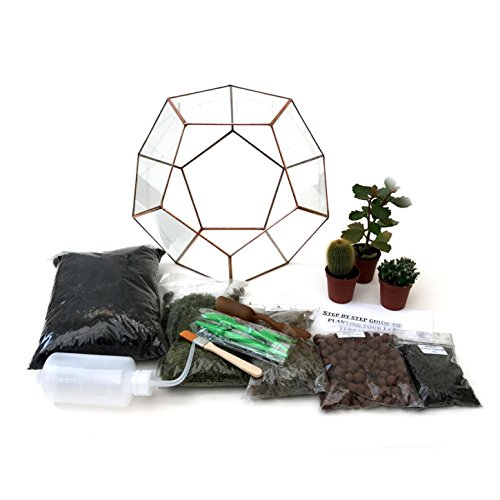 Terrarium Dodécaèdre avec kit de terrarium, plantes/s, outils et guide étape par étape - Emballé en Angleterre (grande, patine cuivrée)