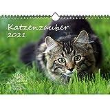 Katzenzauber DIN A4 Kalender für 2021 Katzen und Katzenbabys - Seelenzauber
