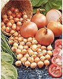 Kisshes Seedhouse - 100pcs Bio Géant Graines D'oignons Jardin Bio Légumes Plante Graines Légumes