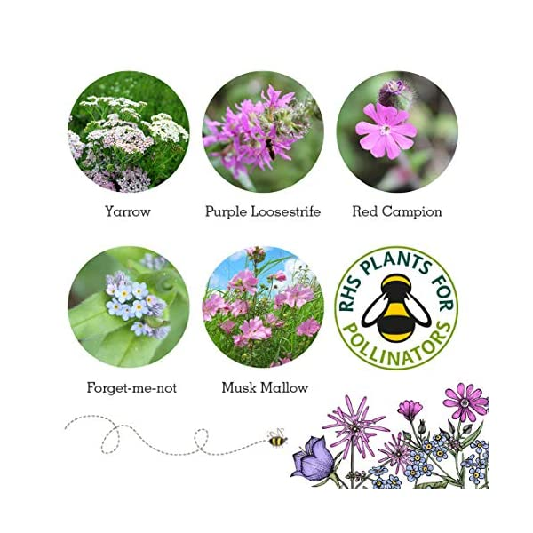 Butterfly Mix Seed balls - Mix Of 1000 Native Wildflower Seeds For Butterflies. Forget Me Not, Yarrow, Red Campion, Purple Loosestrife, Musk Mallow. Super Easy To Use & Grow. Recommended By The Butterfly Conservation Organisation. *RHS Perfect For Pollinators* Check Out The Full SEEDBALL Range!! *Ideal Garden Gift*