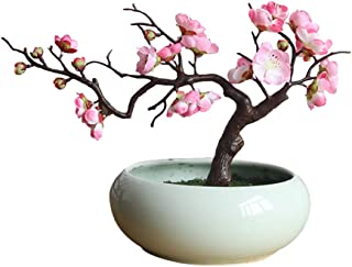 plum blossom bonsai