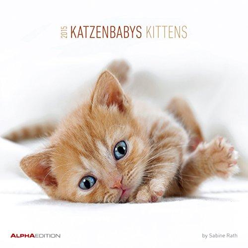 Katzenbabys 2015 - Kittens - Broschürenkalender (30 x 60 geöffnet) - Tierkalender - by Sabine Rath