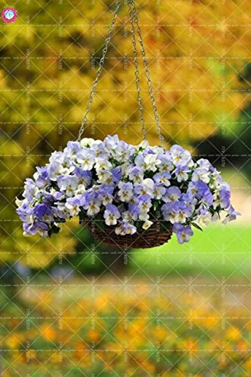 100pcs Hanging Pansy Viola Tricolor Seeds Rare Flower Perennial Outdoor herb Decorate The House Garden Pot Plants