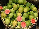Caja de 3kg Guayaba Rosa. Recién recolectado. Del campo a la mesa en 24h.