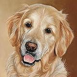 Kit de pintura por números para adultos Golden Labrador Retriever Pet Dog Animal Paintworks Pintura por números Kits sobre lienzo 40 x 50 cm