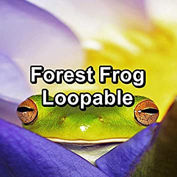 Forest Frog Loopable