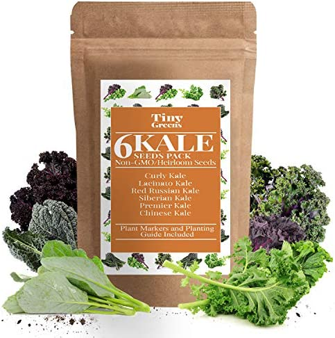 Grow Kale Seeds 6 Collection Pack for Planting 600 Seeds Lacinato Kale Seeds Curly Kale Red product image