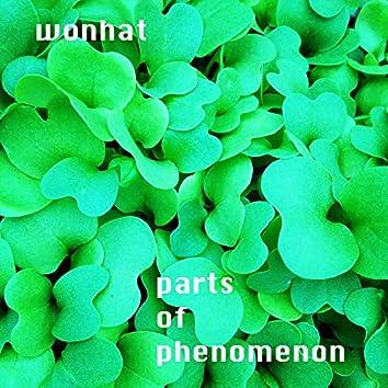 parts of phenomenon